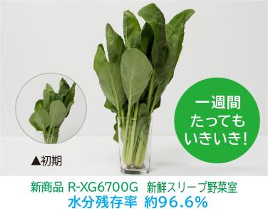 Sản phẩm mới R - XG 6700G Tươi Rửa Rửa Rửa Tỉ lệ Giữ ẩm Khoảng 96,6% Rất sống động sau một tuần!